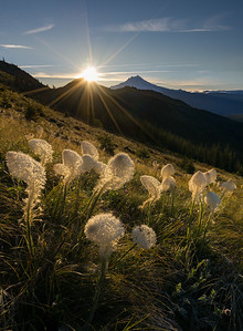 Jefferson and Bear Grass
