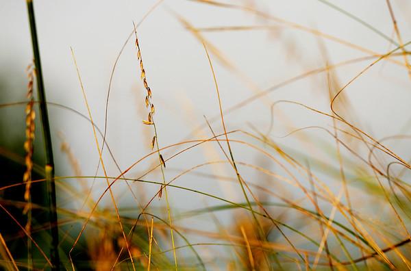IMG_4809 grass