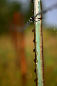 IMG_5829 fence barb