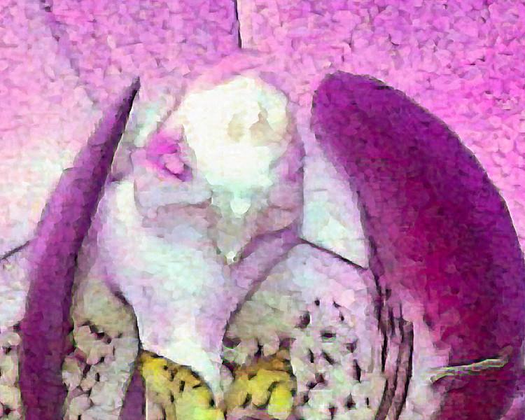 Orchid Parrot