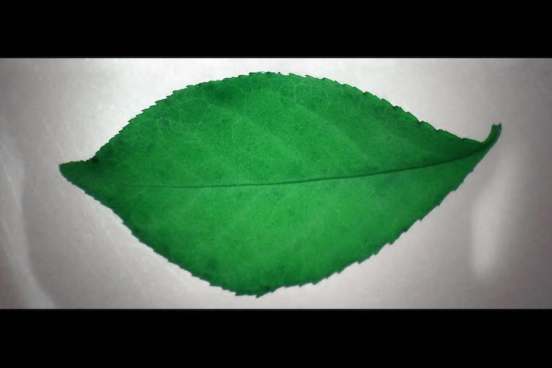 Fall's Kiss in Green