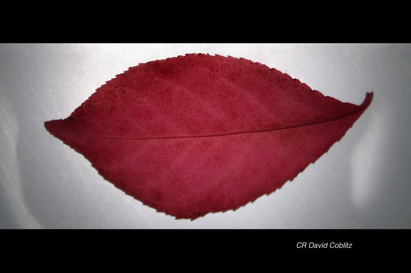 Fall's Kiss