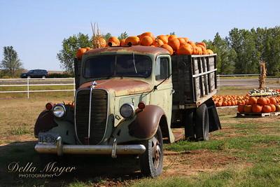 Pumpkins Uploads