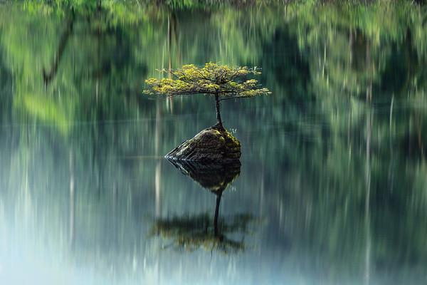 Stillness in Solitude