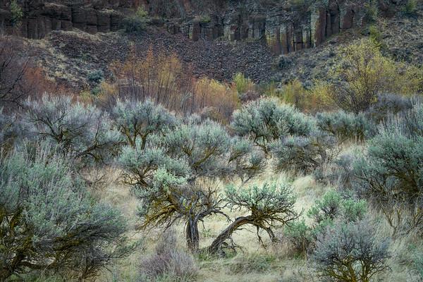 Desert Brush
