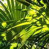 palm rhythm