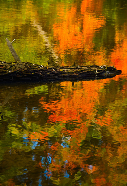 Fall Reflection on Shiawassee River