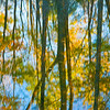 Foliage Reflection
