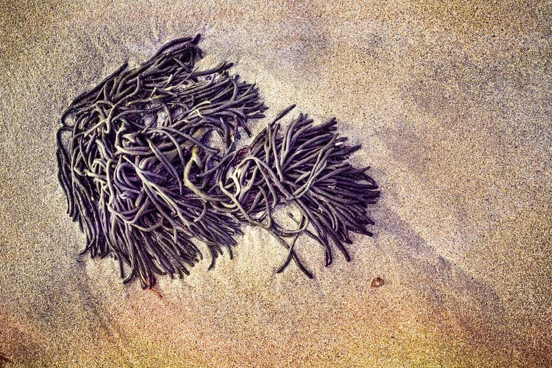 Sand Prints I