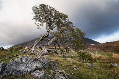 Scotland 2013-178
