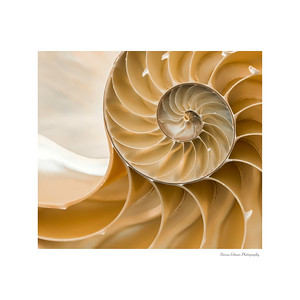 Spiral white mat - wm