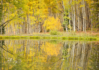 Reflection in Yellow