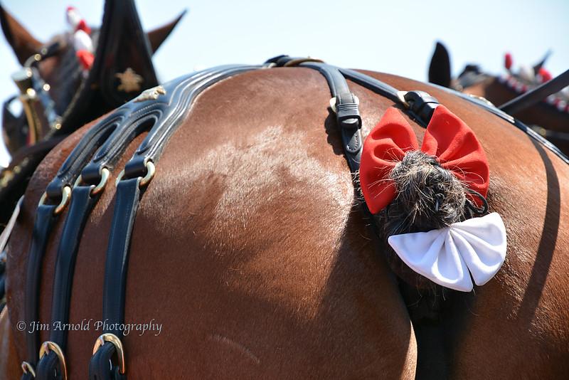 Horse's Petute
