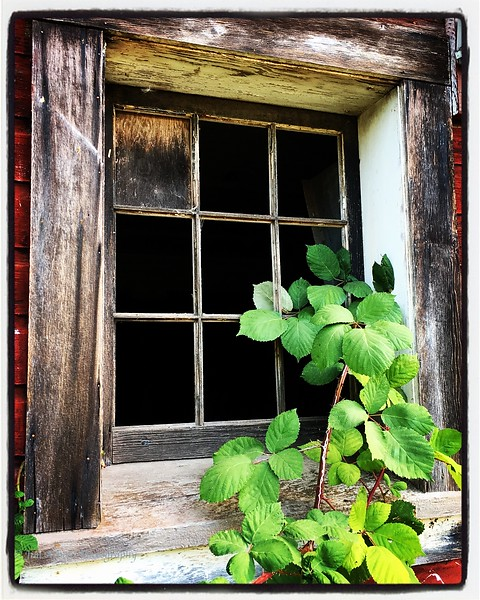 Barn Window and Greenery