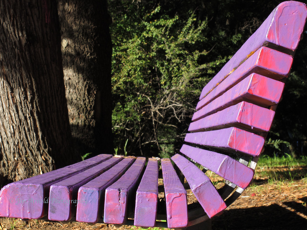 The Magenta Bench