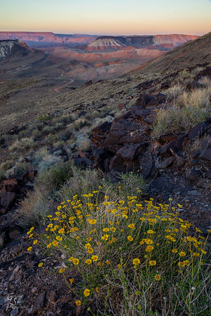 Joe Blake's Wildflowers