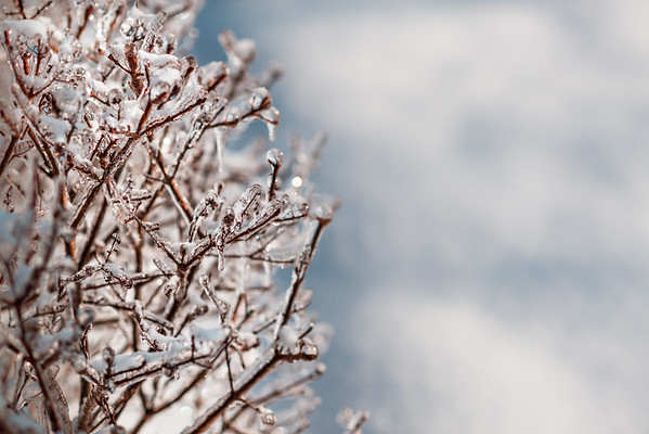 Icicle Branch 2