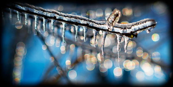 Icicle Branch 3