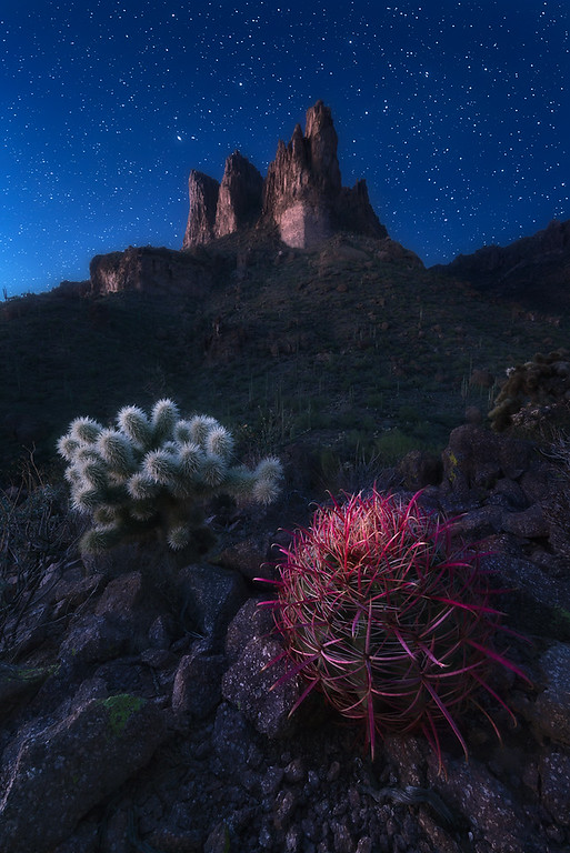 Night photograph of barrel and cholla cactus in arizona superstition mountains