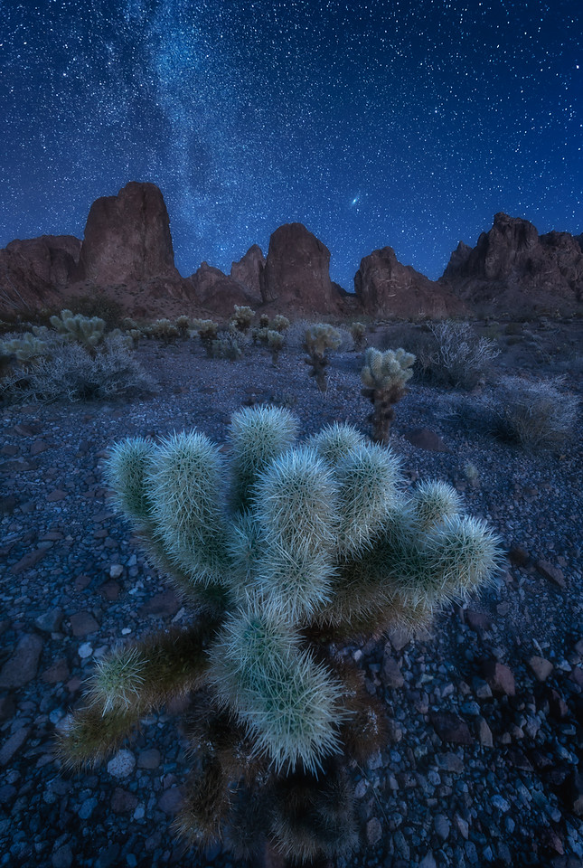 Andromeda and The Cholla