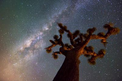 Milky Way with Joshua Tree