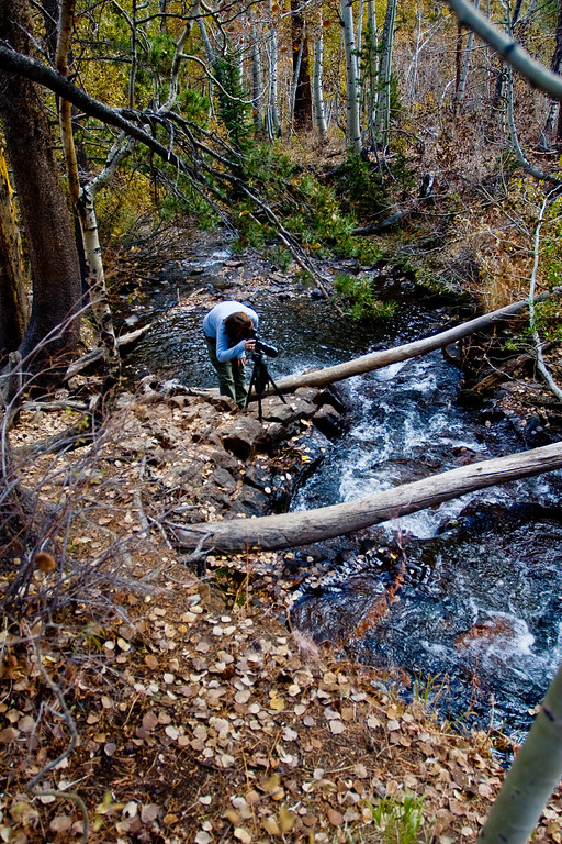 Creek in Lundy Canyon