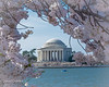 Jefferson Memorial with Cherry Blosoms frame IMG_4670