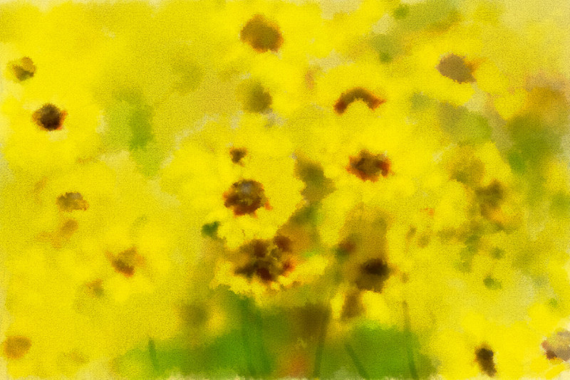 _MG_6743water color coreopsis
