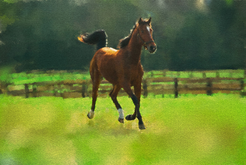 Happy horse in paddock water colorSM