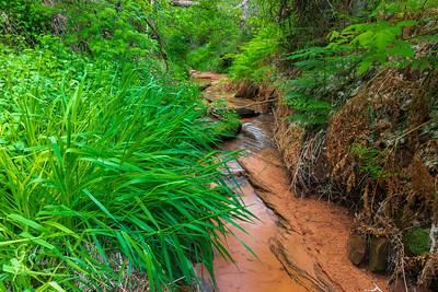 Wet Jungle Desert Path