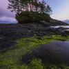 Seaweed Sonata
