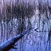Horsehoe Lake II