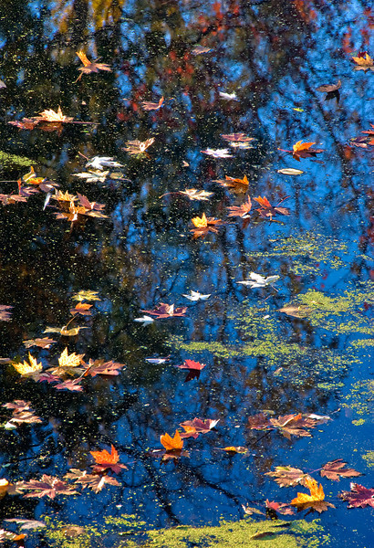 Fall Leaves on Water