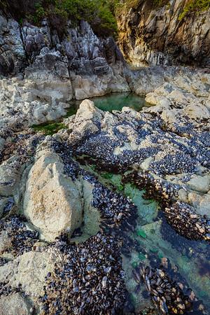 Mussel Cove