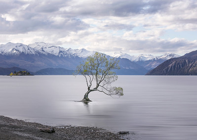 """My take on """"the Wanaka Tree""""."""