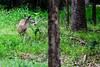 wildlife-6429