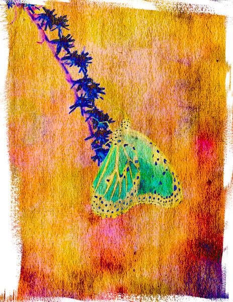 _MGL3786 Bizarre Butterfly