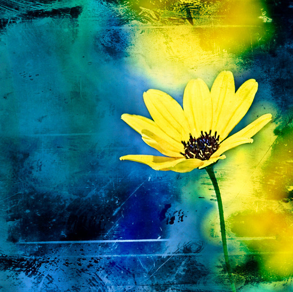 _MG_3129-BlueGreen background