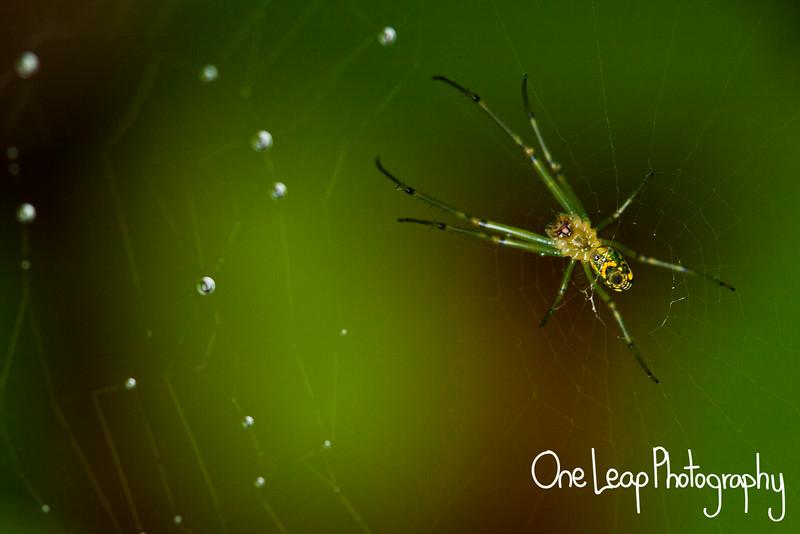 A garden spider in Boone, NC