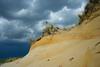 After a rainstorm.  Yucca.  Pawnee National Grassland, CO.