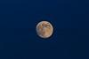 Moonrise over Texas.<br /> Muleshoe National Wildlife Refuge.