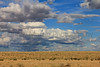 Clouds over shortgrass prairie and cholla<br /> Comanche National Grassland, Otero County, Colorado.