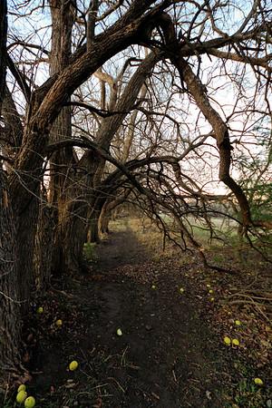 Trail under the Osage Orange trees.  Near Newton, KS.