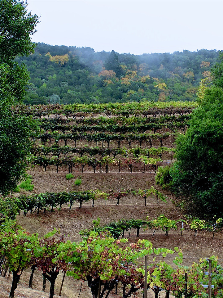I like the way the vineyards look on the hilside