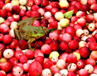 Bog Frog IMG_0108 14x17
