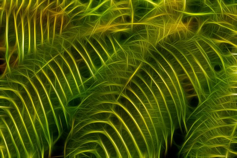 2013-02-01_Maui_Canon7D_-12.jpg