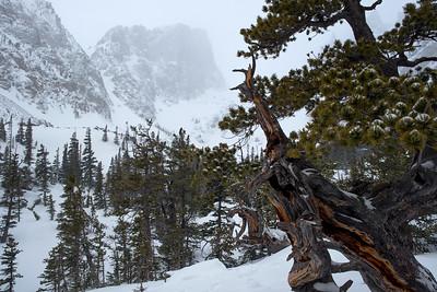 Hallett Peak  RMNP