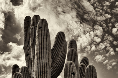 Clouds and Cactus, Tucson, Arizona, 2012