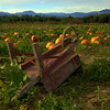 Pumpkin Patch.