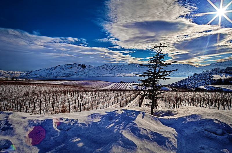 "Grapes Lake Chelan Washington<br /> <a href=""http://rickwilliamsphotography.blogspot.com/2013/02/grapes-lake-chelan-washington.html"">http://rickwilliamsphotography.blogspot.com/2013/02/grapes-lake-chelan-washington.html</a>"